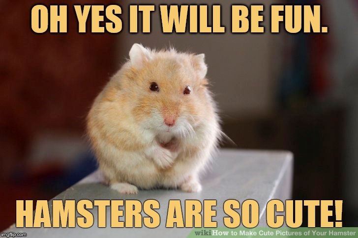 Hamster Weekend July 6-8 a bachmemeguy2, 1for peace, and  Shen_Hiroku_Nagato event | OH YES IT WILL BE FUN. HAMSTERS ARE SO CUTE! | image tagged in memes,hamster weekend,fun,hamster,are,so cute | made w/ Imgflip meme maker