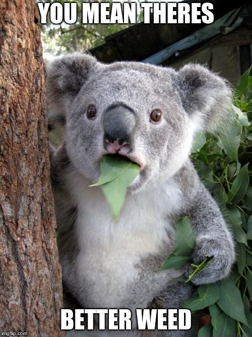 Surprised Koala Meme | YOU MEAN THERES BETTER WEED | image tagged in memes,surprised koala | made w/ Imgflip meme maker