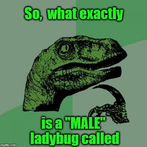 "I think I've seen this asked before, but I'm curious | So,  what exactly is a ""MALE"" ladybug called 