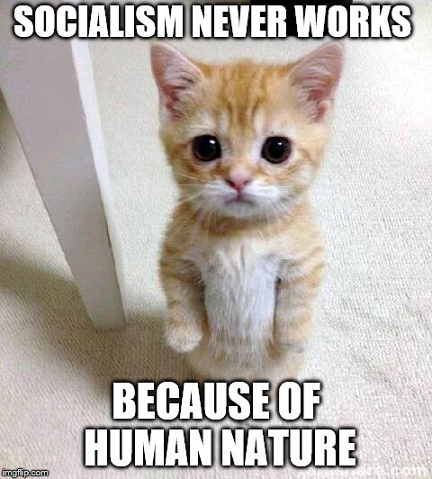 Cute Cat Meme | SOCIALISM NEVER WORKS BECAUSE OF HUMAN NATURE | image tagged in memes,cute cat | made w/ Imgflip meme maker