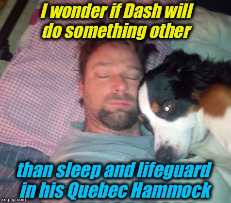 I wonder if Dash will do something other than sleep and lifeguard in his Quebec Hammock | made w/ Imgflip meme maker