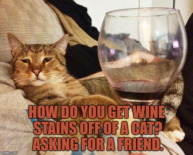 Wine Cat | HOW DO YOU GET WINE STAINS OFF OF A CAT? ASKING FOR A FRIEND. | image tagged in wine cat,funny,memes,funny memes,wine,cat | made w/ Imgflip meme maker