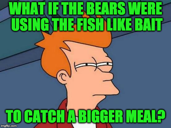 Futurama Fry Meme | WHAT IF THE BEARS WERE USING THE FISH LIKE BAIT TO CATCH A BIGGER MEAL? | image tagged in memes,futurama fry | made w/ Imgflip meme maker