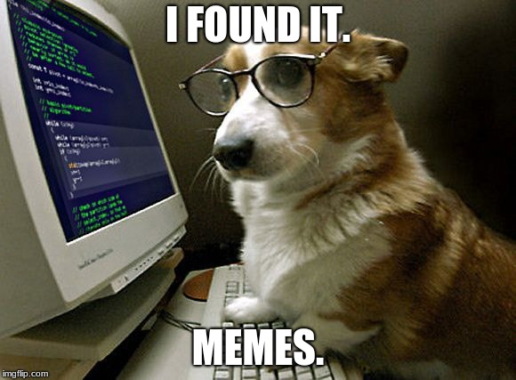 corgi hacker | I FOUND IT. MEMES. | image tagged in corgi hacker | made w/ Imgflip meme maker
