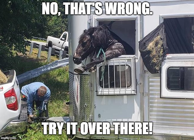 MR OBVIOUS | NO, THAT'S WRONG. TRY IT OVER THERE! | image tagged in horse | made w/ Imgflip meme maker