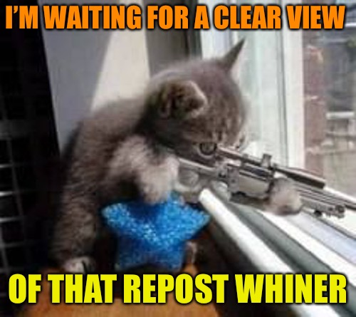Say this is a repost, I dare you... | I'M WAITING FOR A CLEAR VIEW OF THAT REPOST WHINER | image tagged in sniper cat 500px wide,memes,repost whiner,imgflip,reposting my own | made w/ Imgflip meme maker