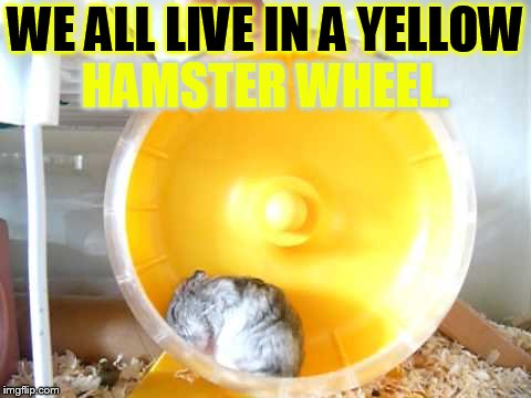 WE ALL LIVE IN A YELLOW HAMSTER WHEEL. | made w/ Imgflip meme maker