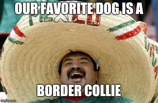 Happy Mexican | OUR FAVORITE DOG IS A BORDER COLLIE | image tagged in happy mexican | made w/ Imgflip meme maker