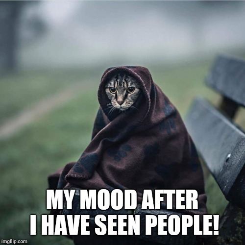Sombre cat | MY MOOD AFTER I HAVE SEEN PEOPLE! | image tagged in grumpy cat,memes,stupid people | made w/ Imgflip meme maker