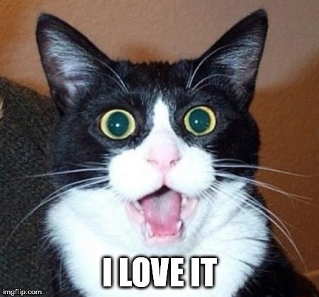 Surprised cat lol | I LOVE IT | image tagged in surprised cat lol | made w/ Imgflip meme maker