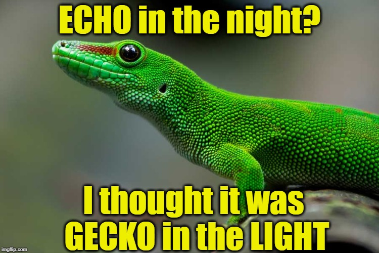 ECHO in the night? I thought it was GECKO in the LIGHT | made w/ Imgflip meme maker