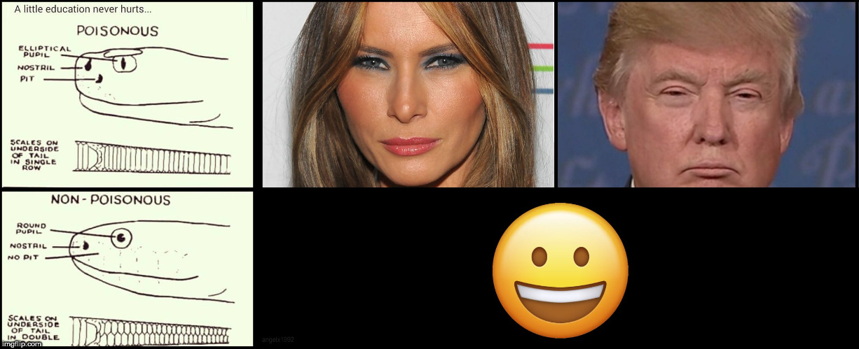 image tagged in snake,snakes,evil trump,melania,donald trump the clown,melania trump | made w/ Imgflip meme maker