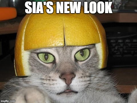 Fits very well | SIA'S NEW LOOK | image tagged in sia,copycat,cats,orange | made w/ Imgflip meme maker