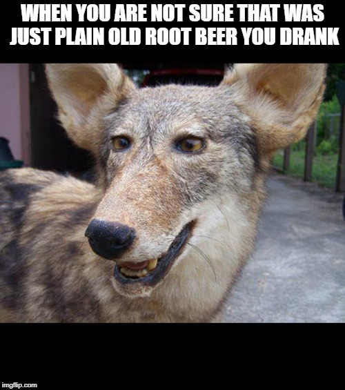 This happened to me last 4th of July even though I was not drunk I was just fine thankfully  | WHEN YOU ARE NOT SURE THAT WAS JUST PLAIN OLD ROOT BEER YOU DRANK | image tagged in drunk,beer,stuffed animal,sober,mistake | made w/ Imgflip meme maker
