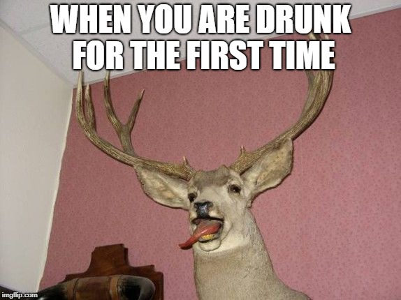 Man, I have been making a ton of memes that are about being drunk...what is wrong with me? | WHEN YOU ARE DRUNK FOR THE FIRST TIME | image tagged in deer,drunk,stuffed animal,first time | made w/ Imgflip meme maker