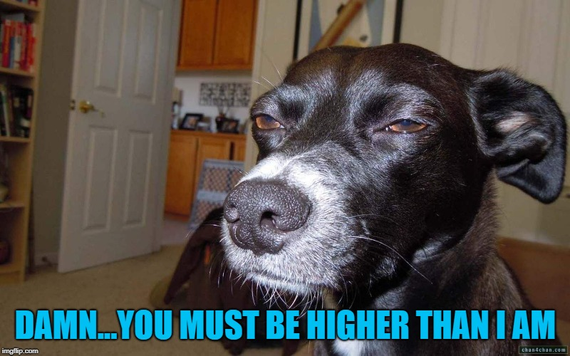 DAMN...YOU MUST BE HIGHER THAN I AM | made w/ Imgflip meme maker