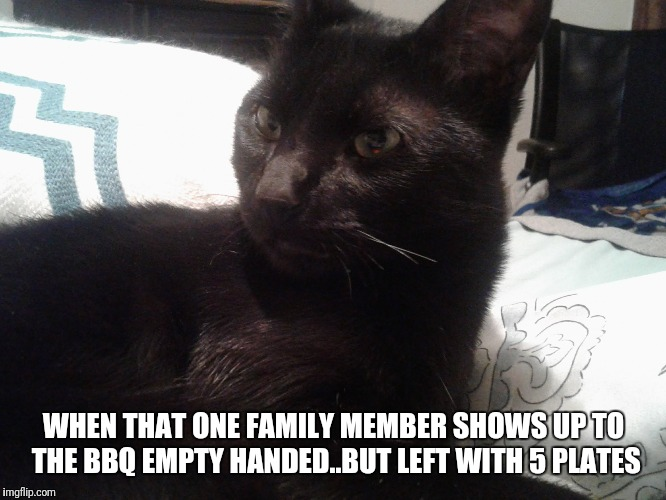 Everybody has one | WHEN THAT ONE FAMILY MEMBER SHOWS UP TO THE BBQ EMPTY HANDED..BUT LEFT WITH 5 PLATES | image tagged in funny animals | made w/ Imgflip meme maker