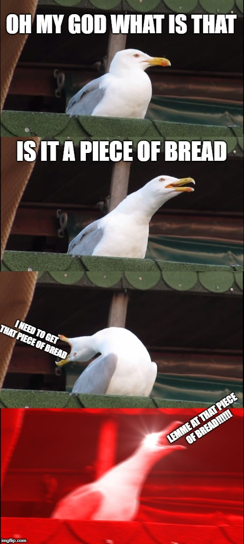 Inhaling Seagull Meme | OH MY GOD WHAT IS THAT IS IT A PIECE OF BREAD I NEED TO GET THAT PIECE OF BREAD LEMME AT THAT PIECE OF BREAD!!!!!! | image tagged in memes,inhaling seagull | made w/ Imgflip meme maker
