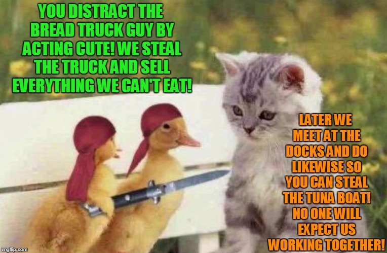 Animals that stick together don't always have feathers! | YOU DISTRACT THE BREAD TRUCK GUY BY ACTING CUTE! WE STEAL THE TRUCK AND SELL EVERYTHING WE CAN'T EAT! LATER WE MEET AT THE DOCKS AND DO LIKE | image tagged in pirate ducks | made w/ Imgflip meme maker