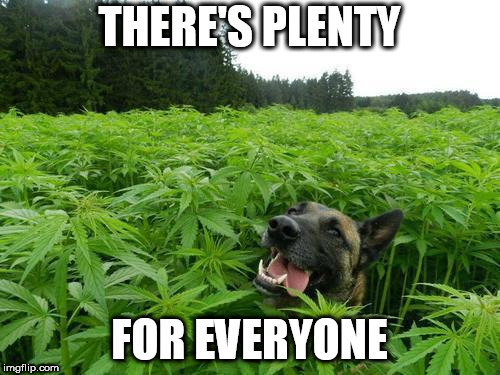 marijuanadog | THERE'S PLENTY FOR EVERYONE | image tagged in marijuanadog | made w/ Imgflip meme maker