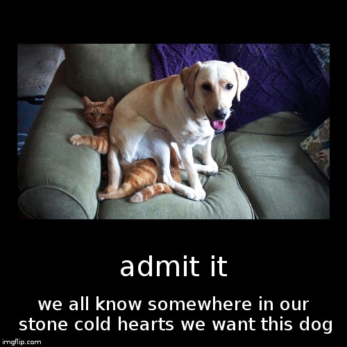 at least i do | admit it | we all know somewhere in our stone cold hearts we want this dog | image tagged in funny,demotivationals | made w/ Imgflip demotivational maker