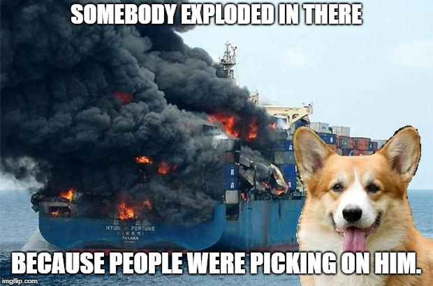 Nobody like bullying. #StopBullyingNow |  SOMEBODY EXPLODED IN THERE; BECAUSE PEOPLE WERE PICKING ON HIM. | image tagged in disaster corgi,no bullying,dogs,corgi,tantrum,explosions | made w/ Imgflip meme maker