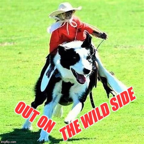 OUT ON THE WILD SIDE | made w/ Imgflip meme maker