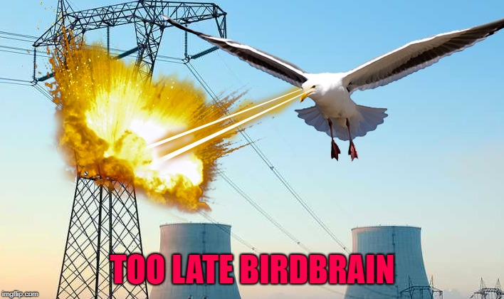 TOO LATE BIRDBRAIN | made w/ Imgflip meme maker