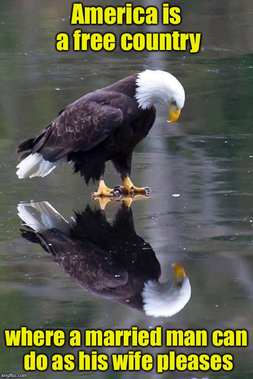 Happy Independence Day | America is a free country where a married man can do as his wife pleases | image tagged in existential patriotic eagle,memes,independence day,freedom | made w/ Imgflip meme maker
