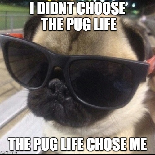 Deal with it. | I DIDNT CHOOSE THE PUG LIFE THE PUG LIFE CHOSE ME | image tagged in pug life | made w/ Imgflip meme maker