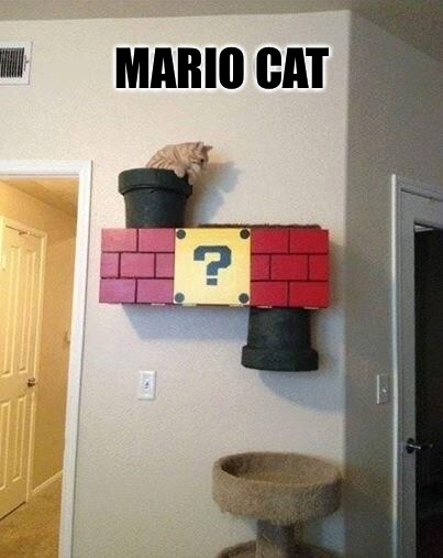 MARIO CAT | image tagged in memes,mario cat | made w/ Imgflip meme maker