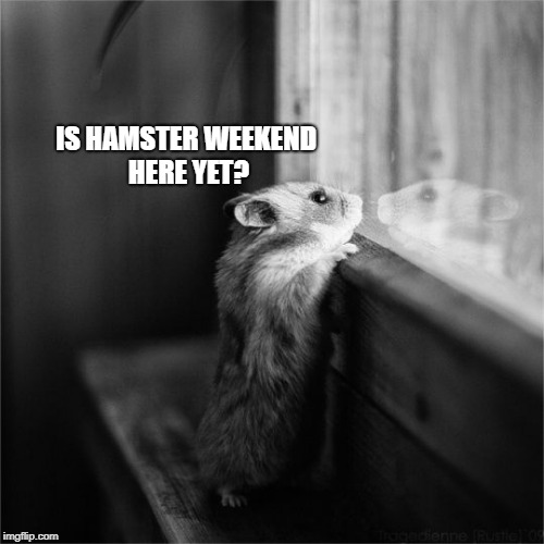hamster weekend is getting closer, 6-8 July | IS HAMSTER WEEKEND HERE YET? | image tagged in memes,hamster weekend | made w/ Imgflip meme maker