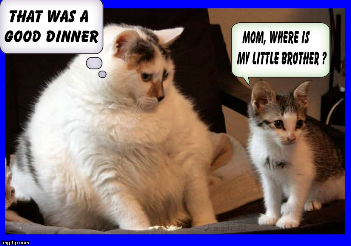 image tagged in cats,kitten,kitty,dinner,fat cat,fatty | made w/ Imgflip meme maker