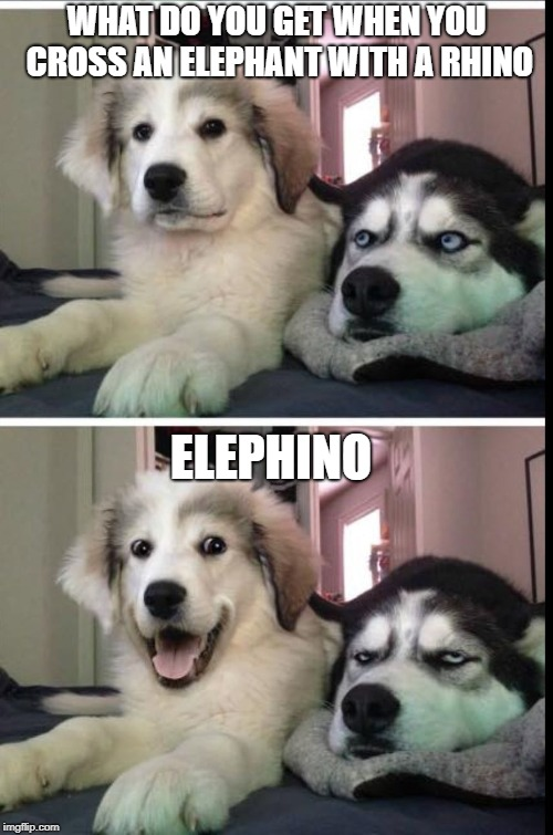 WHAT DO YOU GET WHEN YOU CROSS AN ELEPHANT WITH A RHINO ELEPHINO | image tagged in bad joke dogs | made w/ Imgflip meme maker