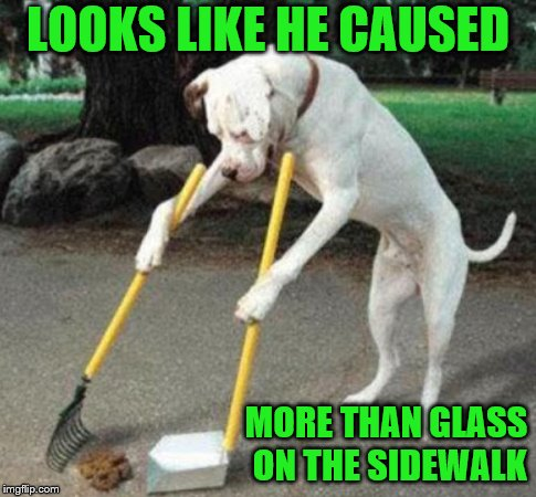 Dog Scooping Poop | LOOKS LIKE HE CAUSED MORE THAN GLASS ON THE SIDEWALK | image tagged in dog scooping poop | made w/ Imgflip meme maker