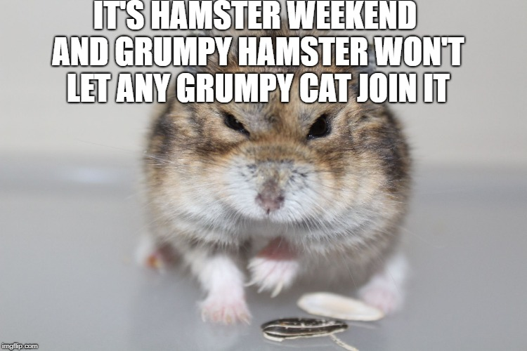 IT'S HAMSTER WEEKEND AND GRUMPY HAMSTER WON'T LET ANY GRUMPY CAT JOIN IT | made w/ Imgflip meme maker