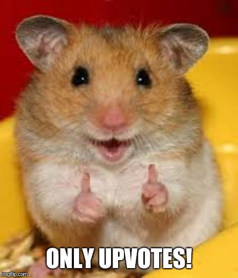 Thumbs up hamster  | ONLY UPVOTES! | image tagged in thumbs up hamster | made w/ Imgflip meme maker