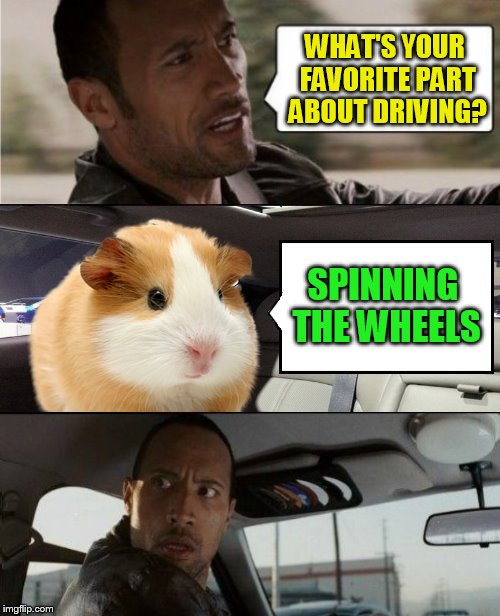 Hamster Weekend July 6-8, a bachmemeguy2, 1forpeace & Shen_Hiroku_Nagato event! | WHAT'S YOUR FAVORITE PART ABOUT DRIVING? SPINNING THE WHEELS | image tagged in the rock driving blank 2,hamster weekend,hamster,the rock driving,spinning wheels,meme | made w/ Imgflip meme maker