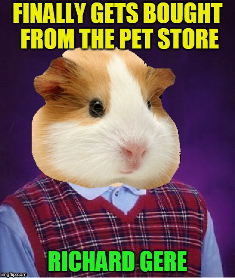 Hamster Weekend July 6-8, a bachmemeguy2, 1forpeace & Shen_Hiroku_Nagato event! | FINALLY GETS BOUGHT FROM THE PET STORE RICHARD GERE | image tagged in bad luck hamster,memes,hamster weekend,richard gere,gerbilling,hollywood rumors | made w/ Imgflip meme maker