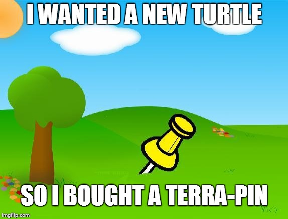 I WANTED A NEW TURTLE SO I BOUGHT A TERRA-PIN | image tagged in terra-pin | made w/ Imgflip meme maker