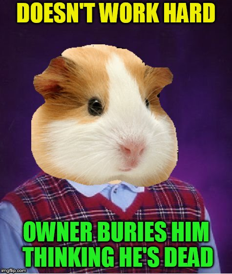 DOESN'T WORK HARD OWNER BURIES HIM THINKING HE'S DEAD | made w/ Imgflip meme maker