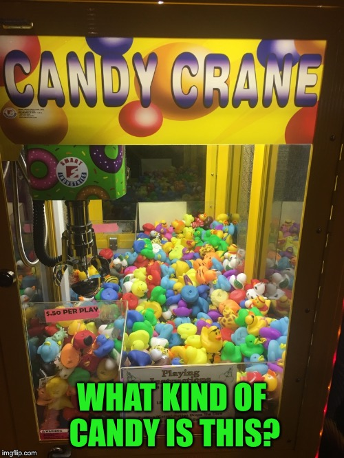 Are the ducks edible? | WHAT KIND OF CANDY IS THIS? | image tagged in confused,computers/electronics,duck,candy | made w/ Imgflip meme maker