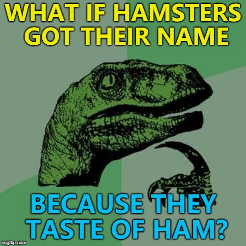 Somebody, somewhere must know... :) Hamster Weekend July 6-8, a bachmemeguy2, 1forpeace & Shen_Hiroku_Nagato extravaganza :) | WHAT IF HAMSTERS GOT THEIR NAME BECAUSE THEY TASTE OF HAM? | image tagged in memes,philosoraptor,hamster weekend,hamsters,animals | made w/ Imgflip meme maker