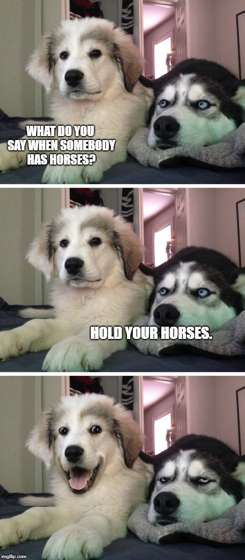 Bad pun dogs | WHAT DO YOU SAY WHEN SOMEBODY HAS HORSES? HOLD YOUR HORSES. | image tagged in bad pun dogs,horses,be patient | made w/ Imgflip meme maker