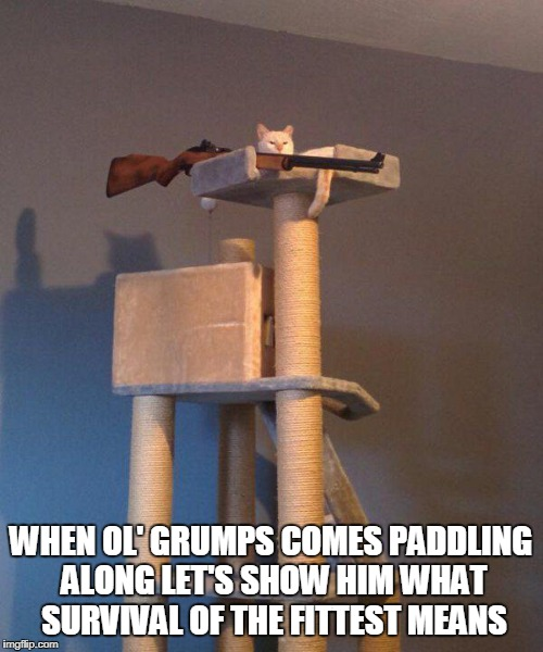 WHEN OL' GRUMPS COMES PADDLING ALONG LET'S SHOW HIM WHAT SURVIVAL OF THE FITTEST MEANS | made w/ Imgflip meme maker
