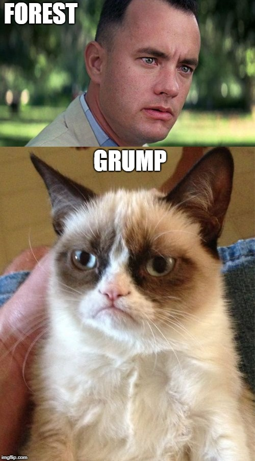 Grumpy Is As Grumpy Does | FOREST GRUMP | image tagged in memes | made w/ Imgflip meme maker