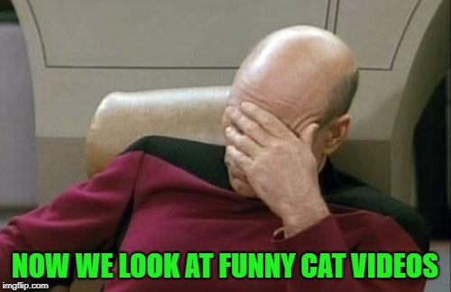 Captain Picard Facepalm Meme | NOW WE LOOK AT FUNNY CAT VIDEOS | image tagged in memes,captain picard facepalm | made w/ Imgflip meme maker