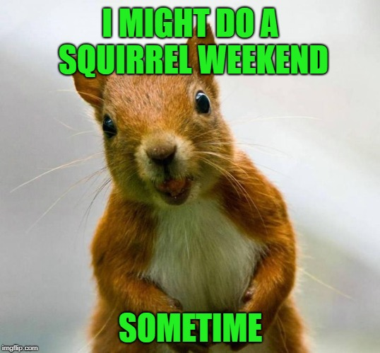 I MIGHT DO A SQUIRREL WEEKEND SOMETIME | made w/ Imgflip meme maker