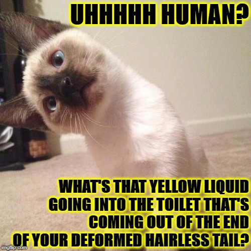 UHHHHH HUMAN? WHAT'S THAT YELLOW LIQUID GOING INTO THE TOILET THAT'S COMING OUT OF THE END OF YOUR DEFORMED HAIRLESS TAIL? | image tagged in hairless tail | made w/ Imgflip meme maker