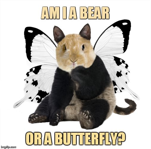 Hamster Weekend July 6-8 a bachmemeguy, 1forpeace, and Shen_Hiroku_Nagato event/So Confusing | AM I A BEAR OR A BUTTERFLY? | image tagged in memes,hamster weekend,bear,or,butterfly,confusing | made w/ Imgflip meme maker